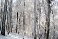 Zimný les  / 1.5000