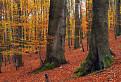 V jesennom malokarpatskom lese / 1.0278