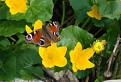 Jar v Turzovskej vrchovine / 1.4444