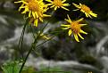 Žlté kvety / 1.2308