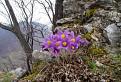 Jar na Muránskej Planine.