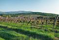 Jar vo vinohrade / 1.0385