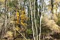 Ponorený les / 2.2500
