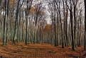Malokarpatský les / 1.0323