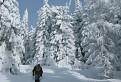 chodníkom na Volovec-Skalisko / 1.0000