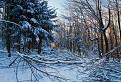 Zničeny les / 1.0000