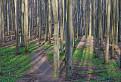 Potulky lesom o dva roky / 0.0000