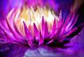 Krása kvetov... / 1.0000