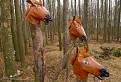 Konské hlavy