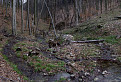 Sviniansky potok / 1.2500