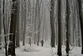 Stratení v pralese / 1.3333