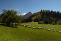 Pásli ovce... / 1.0909