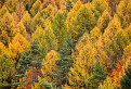 Farebná jeseň / 1.0435