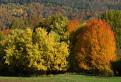 Jesenné farby / 1.0000