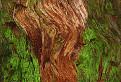 Drevo / 1.5484