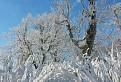 Novembrová zima na dolniakoch / 1.1429