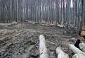 Škodná v lesoch / 0.0000