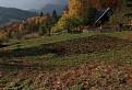 Pravá podzimní / 1.0286