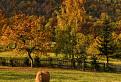 Jesenná paša / 1.0606