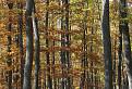 Les pod Priesilom