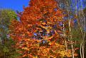 Ohnivé farby jesene / 1.0435
