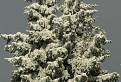 snehová socha / 1.7692