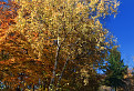 Bielokarpatské brezy / 1.3125