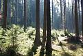 Prebúdzajúci sa les / 0.0000