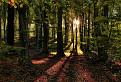 karpatským lesom II
