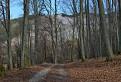 Jelenia hora / 1.1250