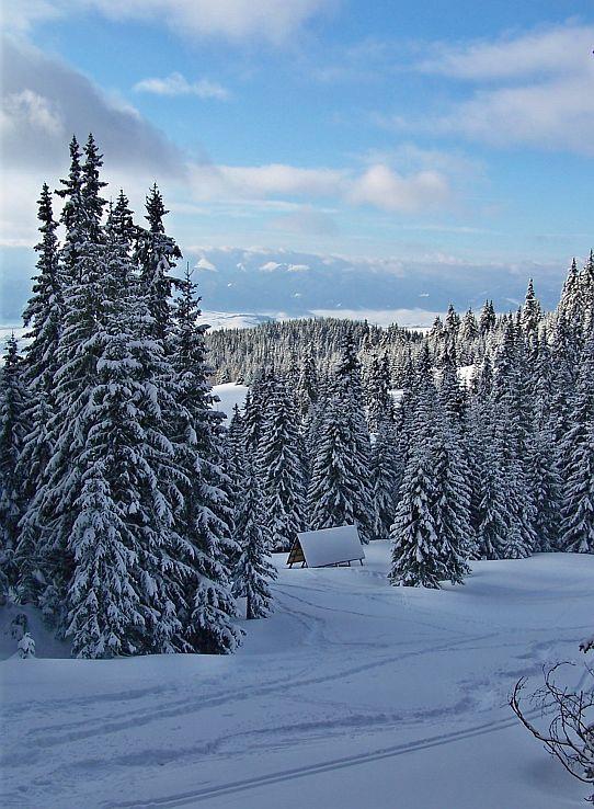 Zimný Červenec