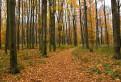 Jesenným lesom / 1.0500