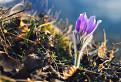 Jar v našom chotári