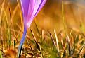 Filaiový kvet / 1.0000