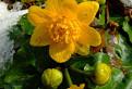 Súboj jari a zimy / 1.0667
