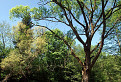 Stromy pri rieke / 1.0000