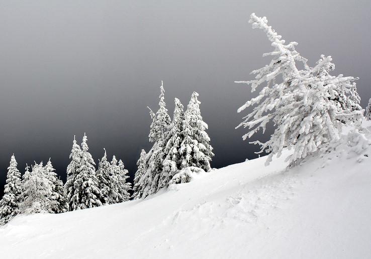 Winter dreams part 8