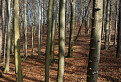 Jarný les / 1.0000
