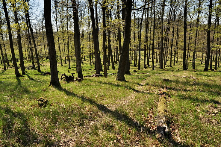 Dubovým lesíkom