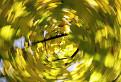 Jesenný kolotoč / 1.0588