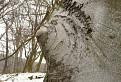 Deformácia stromu / 1.8235