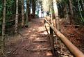 Schody lesa / 1.4444