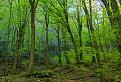 čerstvá zelená
