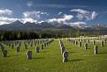 Cintorín / 1.1579