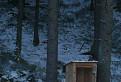 Dnes je otvorené, alebo romantika v lese . / 1.5000