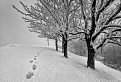 Snehová Vysoká / 1.0541