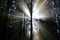 Zobúdzajúci sa les / 1.0256