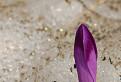 Lilavý hrot / 1.0000