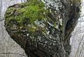 Strom strážca / 1.2143