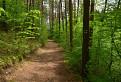 lesným chodníkom